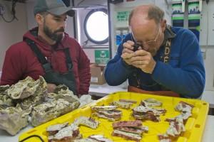 scientists study corals