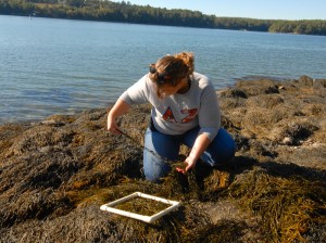 pictures of student surveying the intertidal