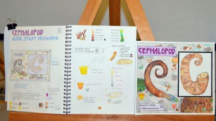 natural science illustrations by Tracy Richardson