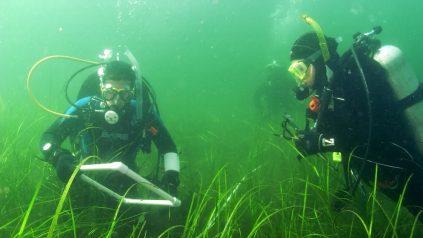 picture od scientific divers