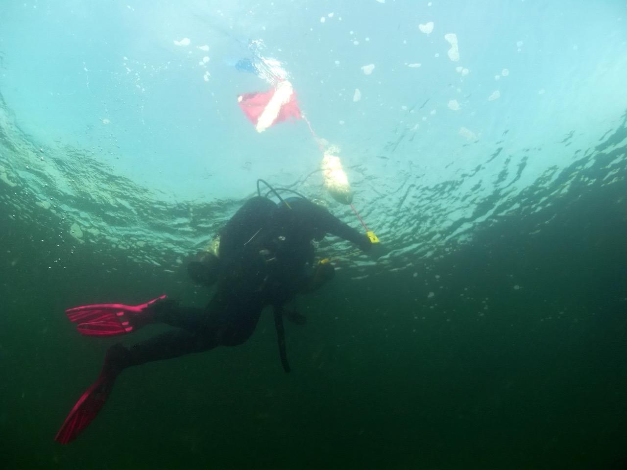 UMaine Divers Win Awards