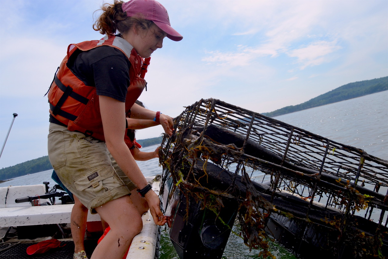 SEANET intern on the Damariscotta River