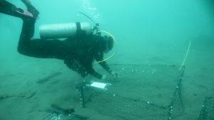 picture of a diver
