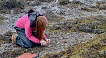 picture of rocky intertidal research