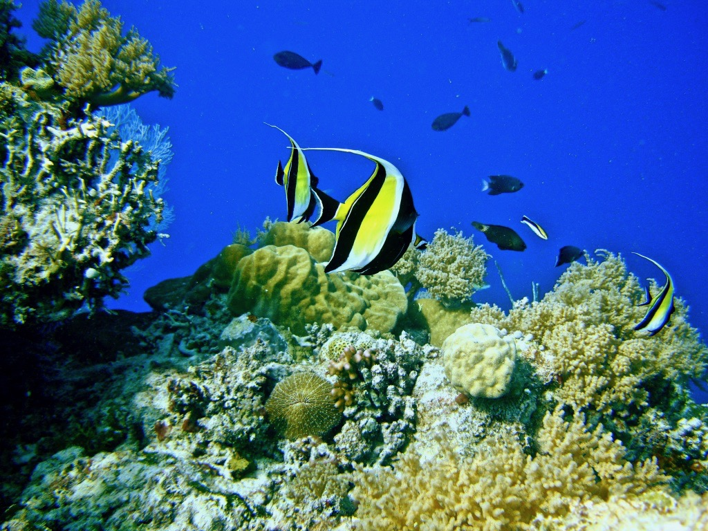 picture of coral reef in Palau