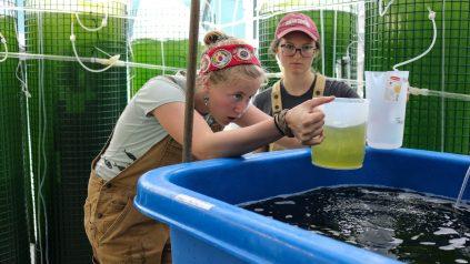 DMC interns prepare to feed oysters