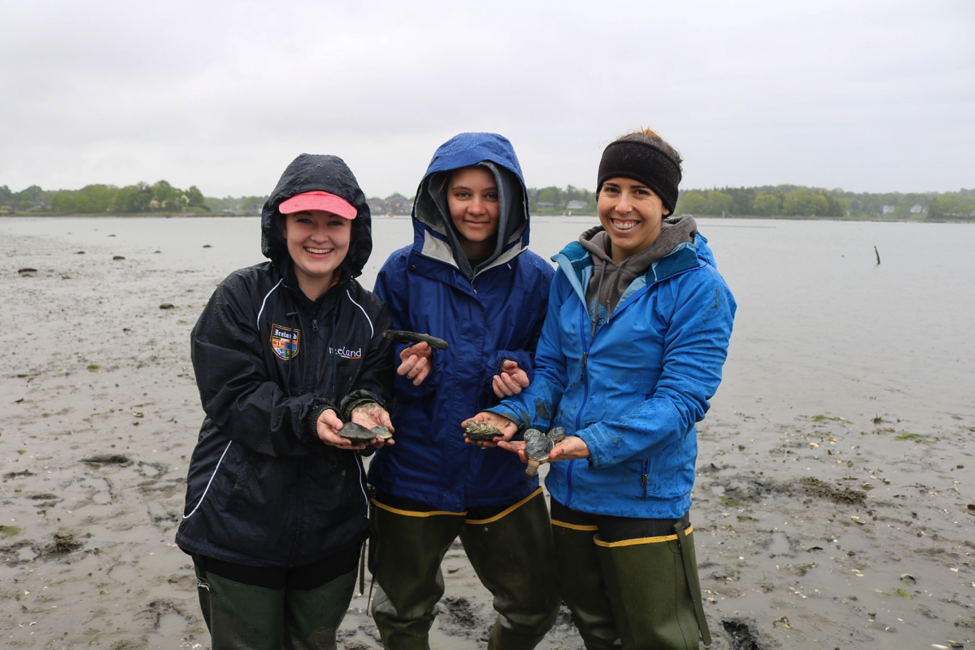 picture of interns digging clams.