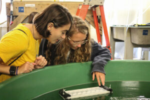 Students look at lobster larvae in a tank