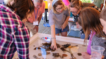 woman shows people marine animals in touch tank at festival