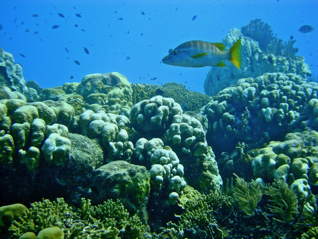 tropical fish around coral reef in Bonaire