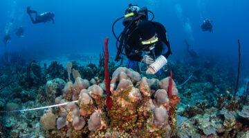 scuba diver underwater researching coral reef